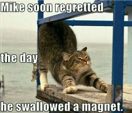 Grasp the Best Of Wednesday Funny Cat Memes