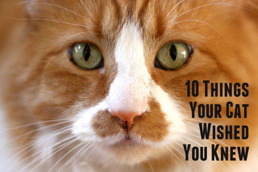 Cats make purrfect panions but it s time you learned a few things about your four