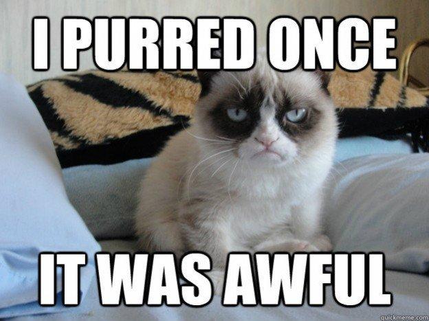 4 best funniest grumpy cat 5