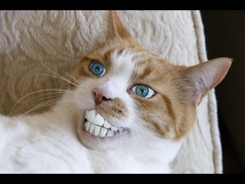 I can Show you some funny cats picture Believe Me This is so funny And am sure you like this If you see that you don t controll your smile