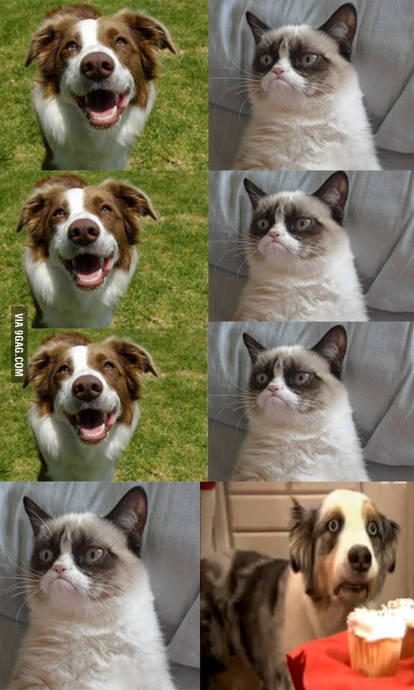 Grumpy cat meme clean
