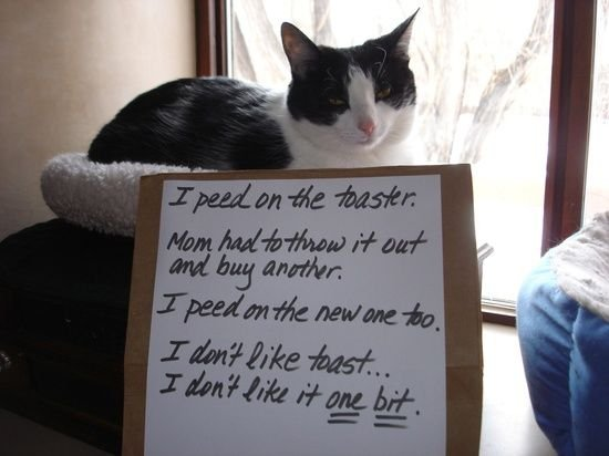 The best of cat shaming Part 7 Boo Fckm HooBoo Fckm Hoo