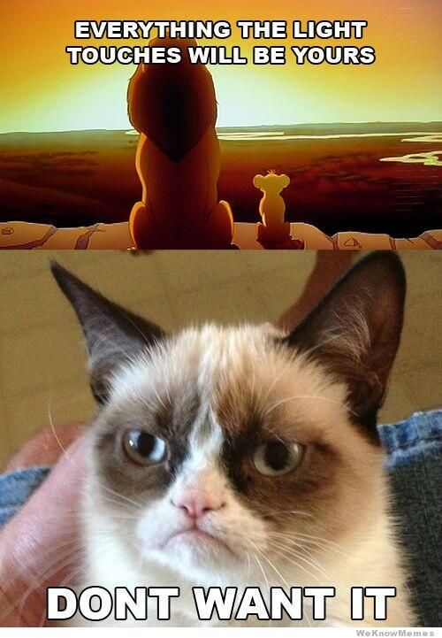 Grasp the Fascinating Funny Divergent Memes Cat