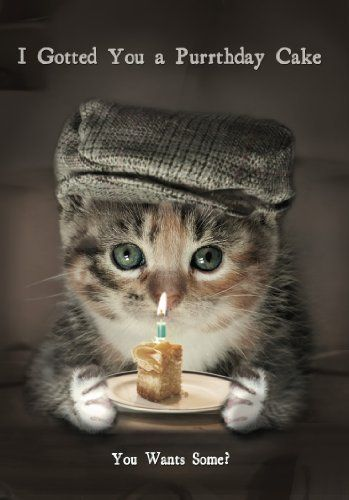 Funny Cat I Gotted You A Purrthday Cake Birthday Card MB006 Amazon fice Products