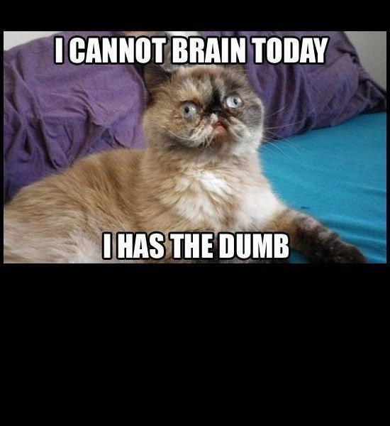 Funny s Dumb Cat Face