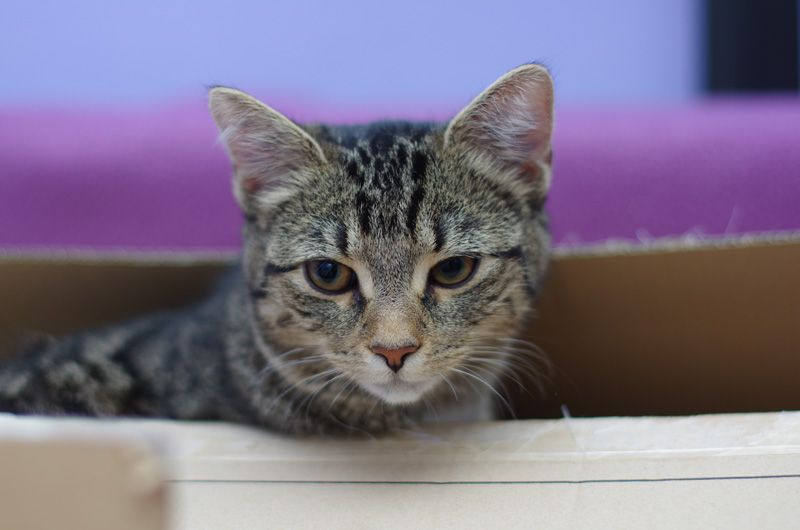 Useful resources on dogs cats & science illustrated by a cat poking its head out Cardboard boxes