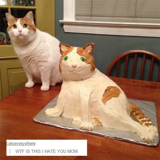 funny cat cake weird copy