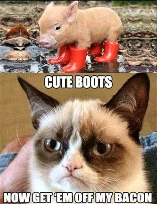Grumpy cat funny grumpy cat humor grumpy cat meme sarcastic funny grouchy cat …For more funny quotes and hilarious images visit