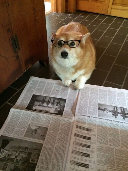 Newspaper Dog Meme Template