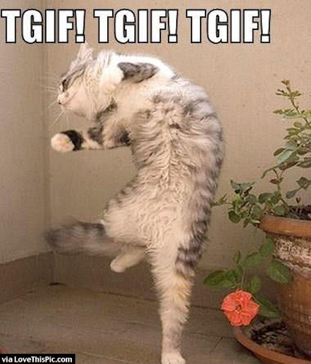 Funny Cat TGIF Meme