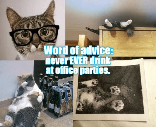 drink never fice parties caption Cats