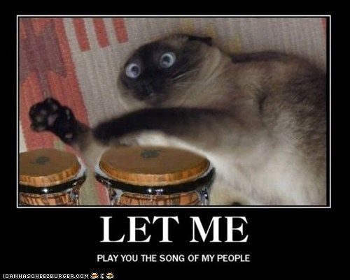 The real cat playing the bongos from the aristocats Find this Pin and more on Funny