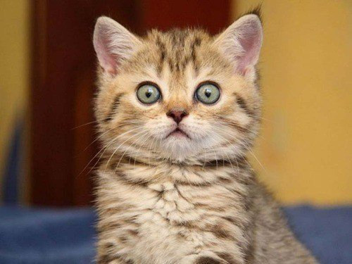 cyoot kitteh of teh day surprised kitten big eyes what has been seen wide eyed Cats