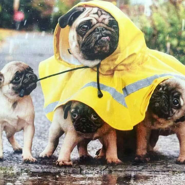 Out for a rainy walk