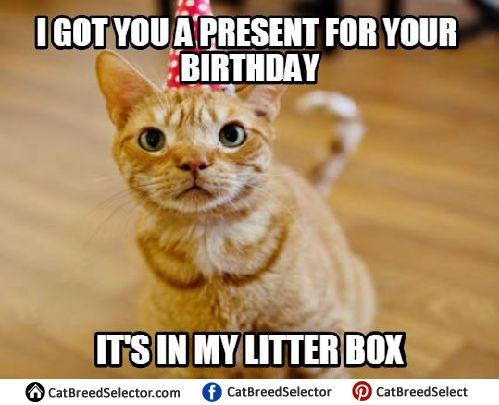 happy birthday cat 2qk81k5ai6y 7cqciyopmen 7cdib26a8p205lxd5kyk1vk