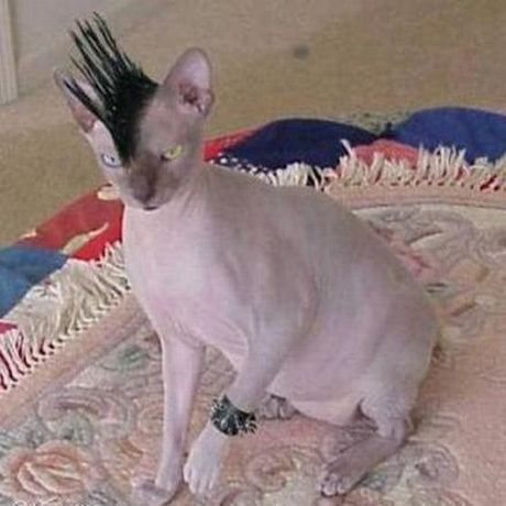 Ugly Emo Cat