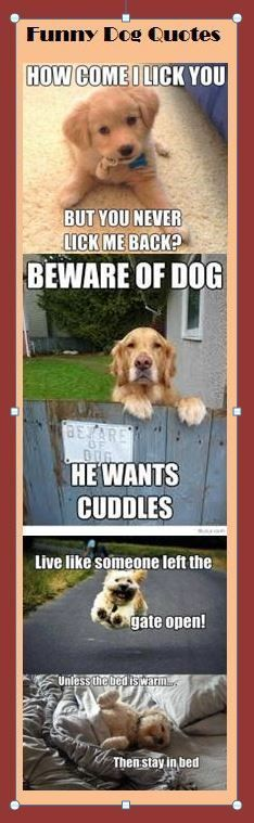 Funny Dog Quotes Cute Animals Funny Animal s Cute Funny Animals Funny