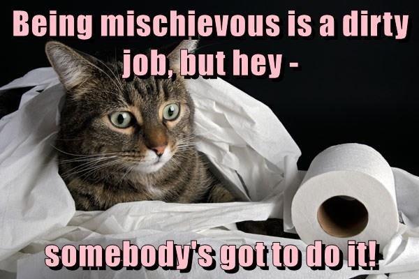 mischievous cat being dirty job caption