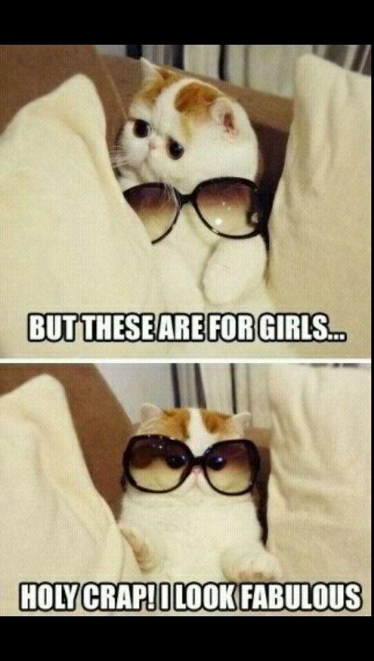A funny cat❤