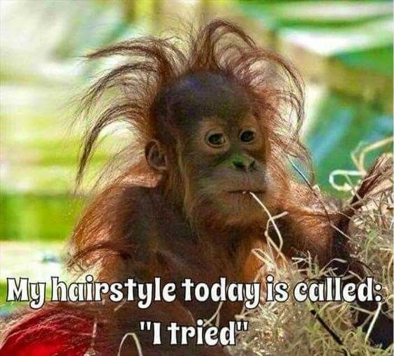Monkeys Funny Saturday Quotes Funny Tired Quotes Funny Girl Memes Funny Monday Quotes