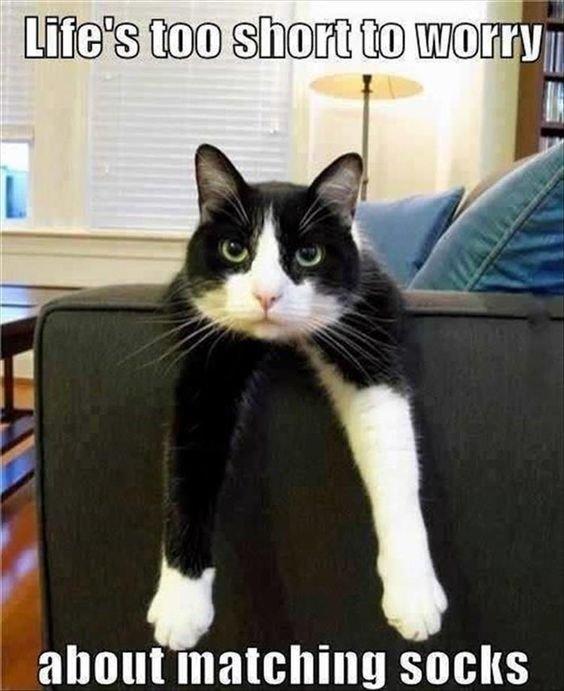 Top 40 Funny Cat Memes 21 Funny cats