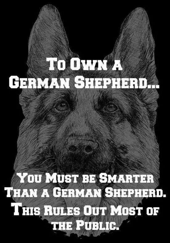 Adopting a German Shepherd Dog From An Animal Shelter