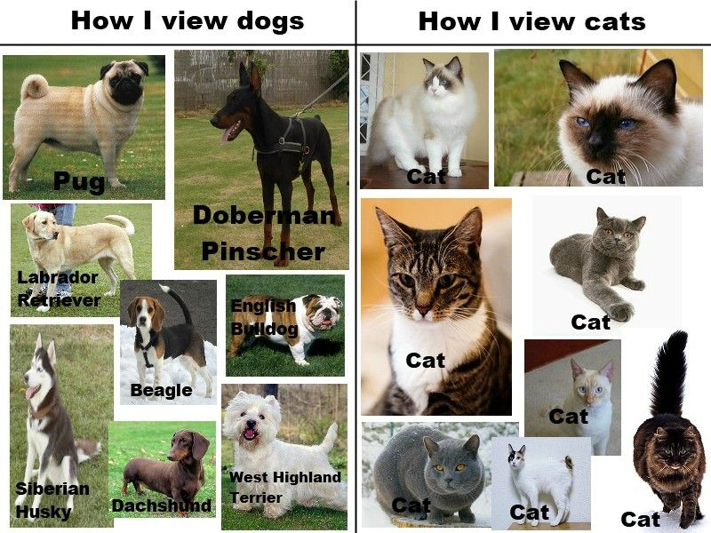 Grasp the Lovely Funny List Of Dog Vs Cat Memes