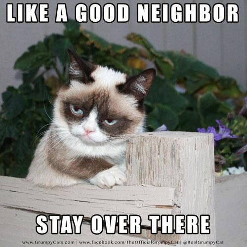 "Always hilarious fb RT"" RealGrumpyCat grumpycat Like a good neighbor picitter fLyaeOxzsP"""