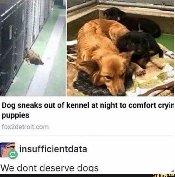 """We don t deserve dogs"" soo true Funny GifsVideos FunnyFunny MemesDog"