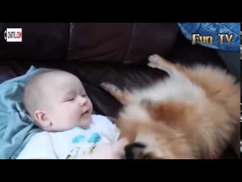 Baby funny with cat and dog how cute baby cute cat cute dog