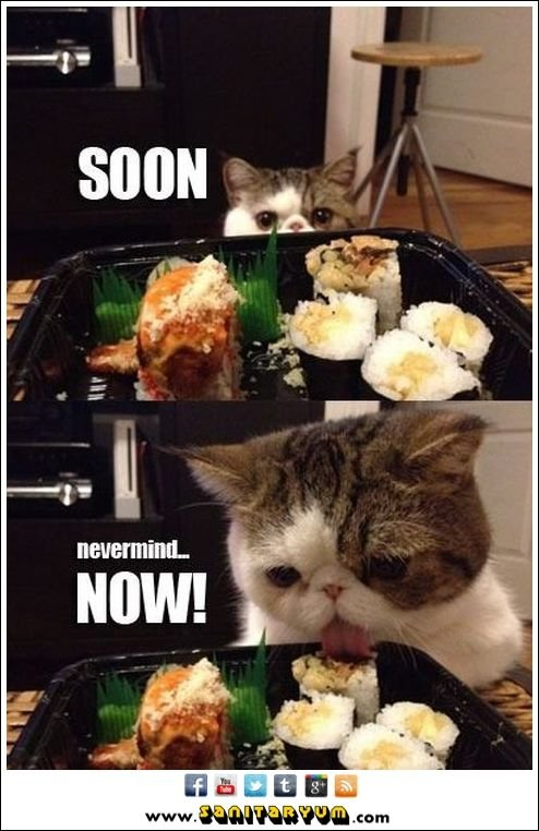 funny cat memes clean Google Search