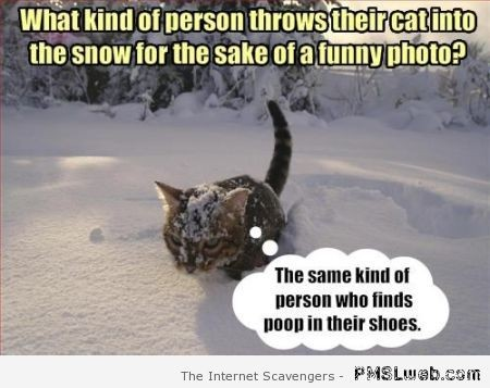 Cat in snow meme – Funny Thursday pics at PMSLweb