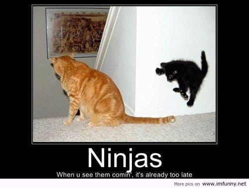 cat funny and ninja image