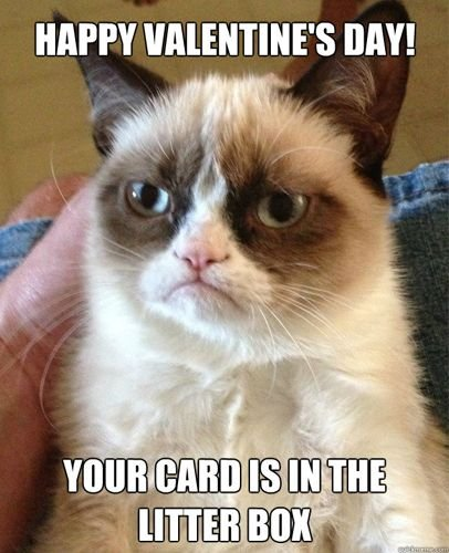 15 Times Grumpy Cat Hated Valentine s Day — Light In The Box