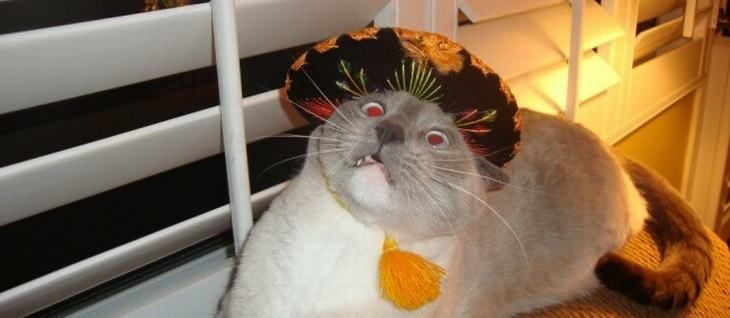 "You think your Cinco De Mayo is crazy Wait ll you see how hard THESE furry lushes via via e Straw via Captain View Animals Wearing Sombreros"" and more"