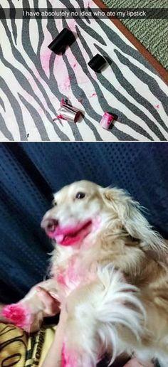 253 best Dog jokes images on Pinterest in 2018