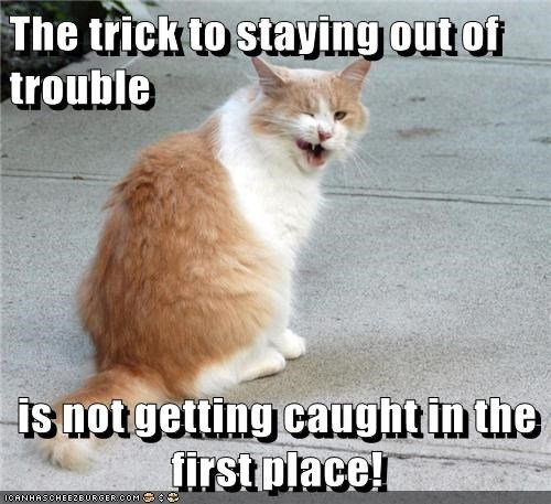 Cats trouble trick