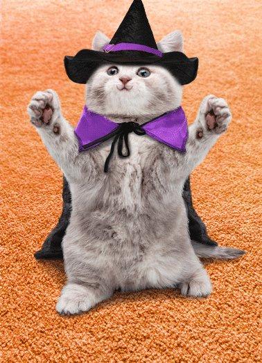 Cat Hug Hal Funny Halloween Sending you a big Happy Halloween