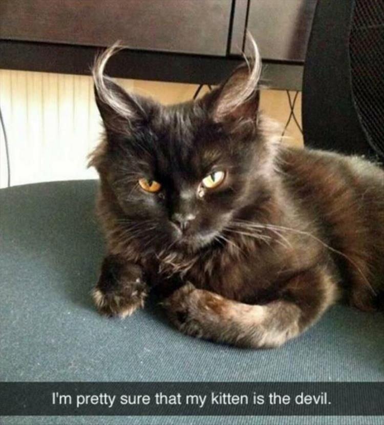 Cat lady · Funny Memes
