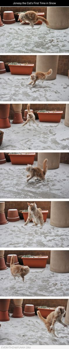 funny cat discovers snow for first time Cute Funny Animals Funny Animal Funny