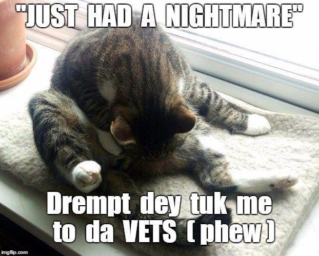 cat took me dreamt nightmare caption vets