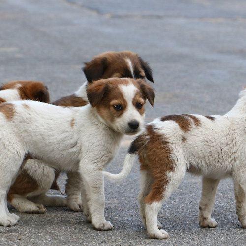 Animal Aid Unlimited Spay & Neuter