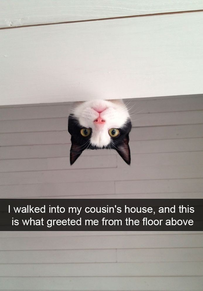 Funny Snapchats Cat Animals Pinterest