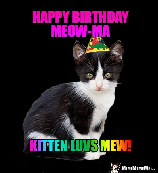 Kitten in Party Hat Says Happy Birthday Meow Ma Kitten luvs mew