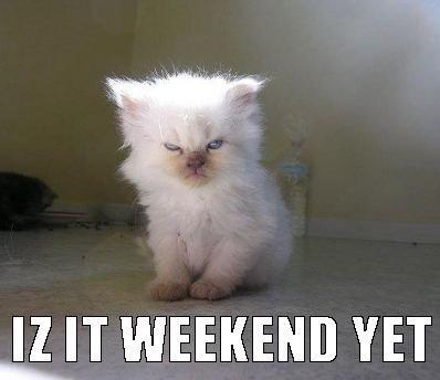 cat weekend