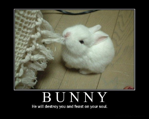 He Will Destory You And Feast Your Soul Funny Inspirational Bunny Image