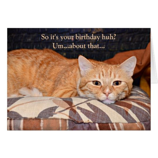 Funny Orange Cat Birthday