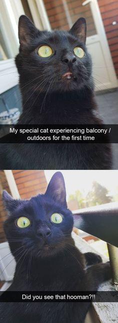 19 Funny And Curious Cat Snapchats Funny Animal MemesCute