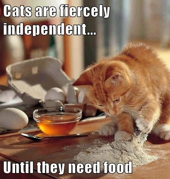 animals cooking independent caption Cats funny