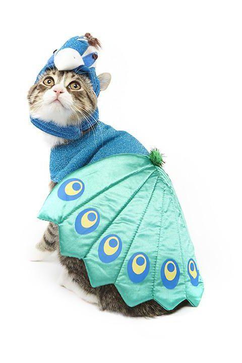 peacock cat halloween costume